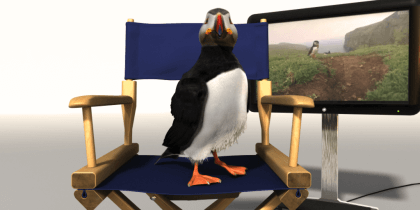 The Adventure of Puffin – Nice Pictures